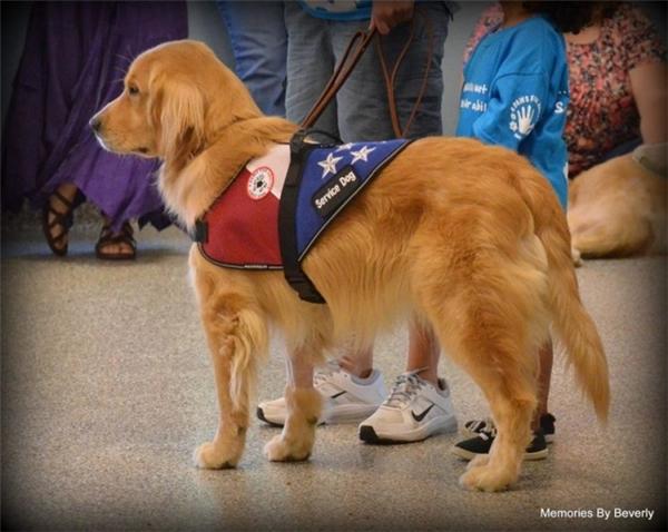 Tornado - chú chó đã thay đổi cuộc đời Kai.