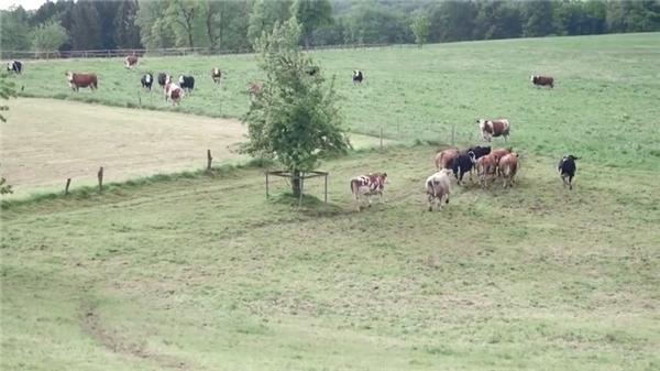 """Emma đã bắt đầu làm quen và kết bạn với những """"người bạn mới""""ở một nông trại xanh tươi và thoáng đãng."""