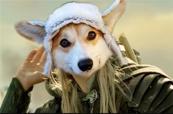 Anh ngày xưa mà được tuyển vào vai Legolas thì phim giành không chỉ 11 giải Oscar thôi đâu nhé. Lại còn có thêm giải cho động vật đóng phim xuất sắc nữa cho xem.