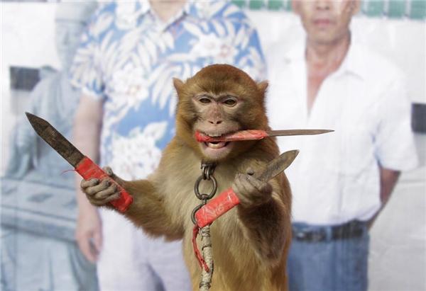 02/02: Một chú khỉ đang tập luyện màn chụp dao trong lúc đứng thăng bằng trên một tấm ván ở trại khỉ tại làng Baowan, huyện Tân Dã, trung tâm tỉnh Hồ Nam, Trung Quốc.