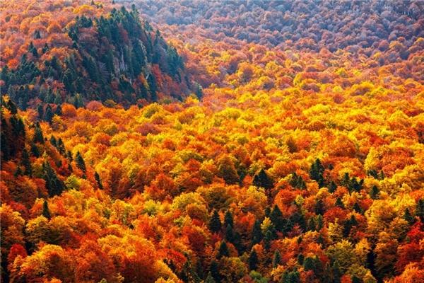 Không cần xem dự báo thời tiết, chỉ cầnngắm nhìnmàu vàng rực rỡ này cũng đủ biết mùa thu đang về.