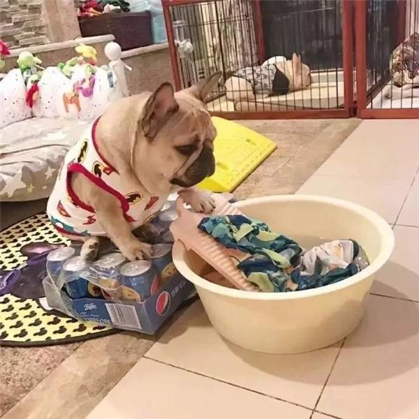 ...giặt đồ...