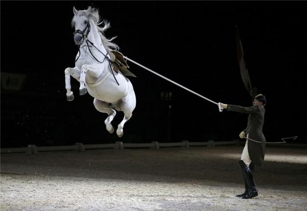 Người kỵ sĩ và chú ngựa đang lập luyện cho buổi biểu diễn tại London.