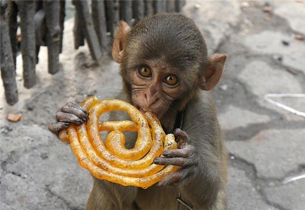 Chú khỉ nuôi trong nhà này đang nhâm nhi miếng kẹo đường trên một vỉa hè ở Kolkata, Ấn Độ.