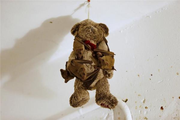 Những chú dơi trái cây bị thương bám vào một con gấu bông tại nhà của một người phụ nữ 28 tuổi người Israel ở Tel Aviv, chuyên chăm sóc những chú dơi bị thương.
