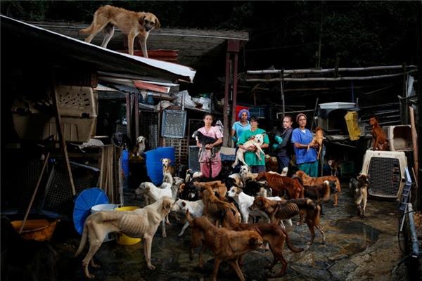 Bên trong một trung tâm cứu trợ chó ở Los Teques, Venezuela.