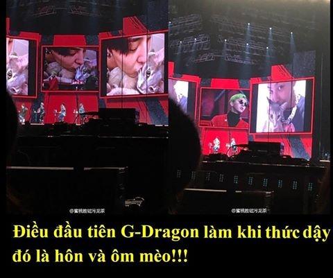 G-Dragon vốn nổi tiếng một anh chàng dịu dàng ấm áp và rấtcưng chiều fan.