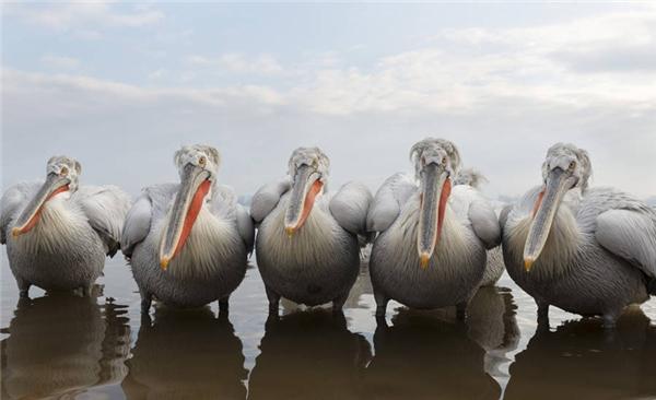 Bầy chim giận dữ. (Ảnh: Adit Merkine)