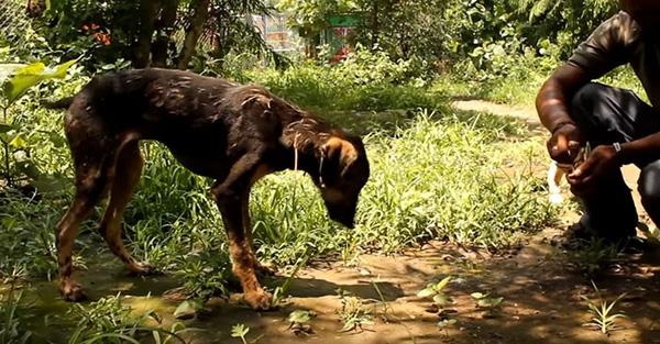 Chú chó toàn thân phủ đầy nhựa đường được cứu sống thần kì