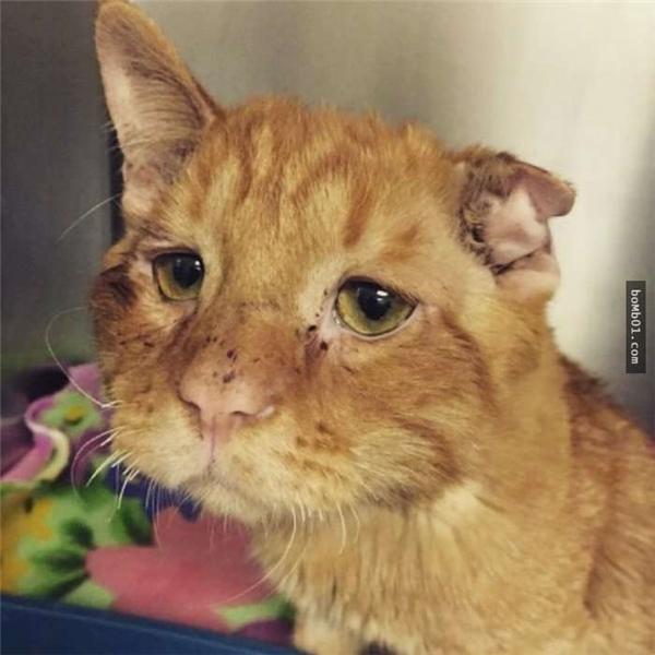 Người ta gọi Ben Benlà chú mèo buồn nhất thế giới. (Ảnh: Internet)