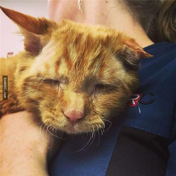Chú mèo đã bị bỏ rơi và không được ai chăm sóc suốt thời gian dài.(Ảnh: Internet)