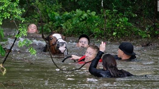 4. Ngày18/4 vừa qua thành phố Houston thuộc bang Texas, Mỹ đã trải qua một trận lũ lịch sử do mưa lớn. Khoảnh khắc đẹp khi một nhóm người cùng nỗ lực giải cứu một chú ngựa khỏi chết đuối đã kịp được ghi nhận.