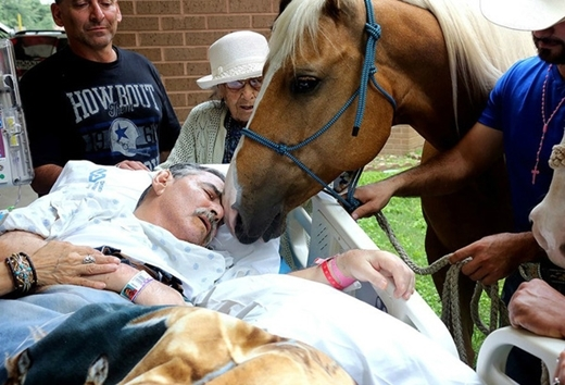 5. Câu chuyện lay động lòng người xảy ra vào cuối tháng 5 vừa qua. Hai chú ngựa Ringo và Sugar đã vượt hơn 240 cây số để tới hôn tạm biệt ông chủ của mình - Roberto Gonzales. Vị cựu quân nhân, huấn luyện viên ngựa người Mỹmuốn giành những phút cuối đời bên hai chú ngựa được ông chăm sóc từ lâu.