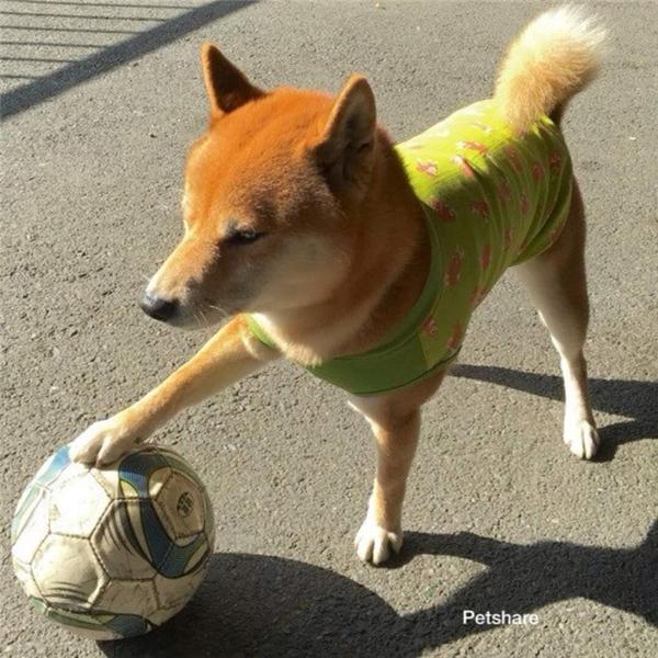 Hừ, kẻ nào vừa đá quả bóng vào sân nhà ông đây, khai ra mau!
