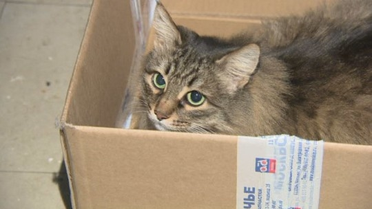 Mèo ủ ấm đứa trẻ trong một cái hộp.(Ảnh: Internet)