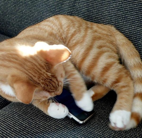 Ông Rosheisenkhông tin được rằng mèo cưng đã thực hiện xuất sắc điều mình đã dạy.(Ảnh: Internet)