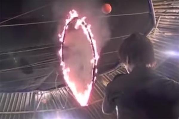 Những chiếc vòng đầy lửa khiến bộ da nhạy cảm của cá heobị tổn thương nghiêm trọng.