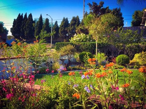 Khu vườn ngập tràn ánh nắng với nhiều chủng loại hoa, thực vật đa dạng, mang đến cảm giác thư giãn, bình yên và ấm áp cho nữ gia chủ xinh đẹp. - Tin sao Viet - Tin tuc sao Viet - Scandal sao Viet - Tin tuc cua Sao - Tin cua Sao