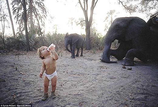 Ngay khi vừa một tuổi rưỡi, Tippi Degređã sống cùng với các loài động vật hoang dã ở Botswana. Trong tấm hình là cô bé còn đang mặc bỉm uống nước giữa đàn voi cao lớn.