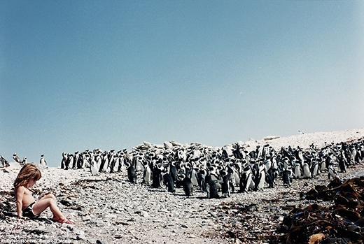 Tippi luôn có thể hồn nhiên chơi đùa cùng với đàn chim cánh cụt ở Namibia.