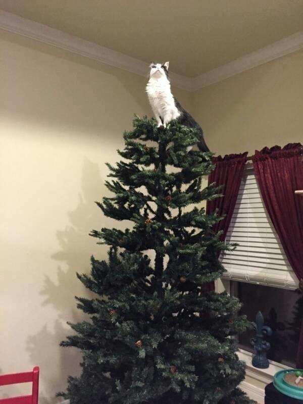 Ảnh Giáng sinh theo phong cách Vua Sư Tử.