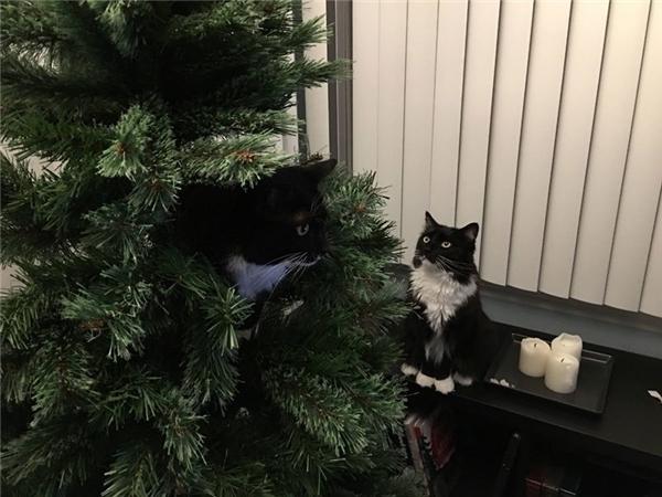 Có hai con mèo bên cửa sổ....