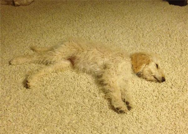 """Sen sắm ở đâu tấm thảm """"xuyệt tông"""" với boss hay vậy?"""