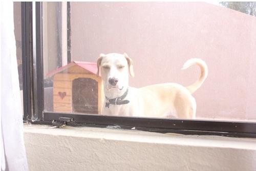 """... và nhìn ra cửa sổ thì gặp anh """"chó già"""" nhìn tôi với ánh mắt """"mất sổ gạo"""" này đây."""