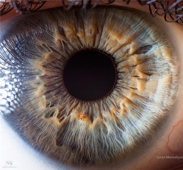 Cận cảnh mống mắt người.