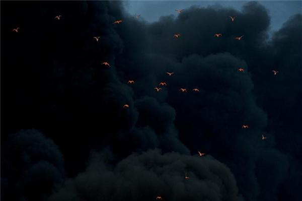 Bầy chim nháo nhào trốn thoát khỏi những đám khói đen cuồn cuộn bốc lên từ một đám cháy.