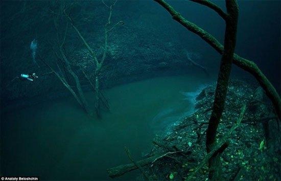 Anatoly Beloshchin cho biết, anh đã phải lặn xuống độ sâu hơn 60m để chụp được những bức hình lung linh thế này.