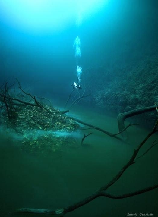 """Anatoly Beloshchin cho biết thêm:""""Khi chúng tôi lặn xuống độ sâu xuống tới 60m, nước ở đây có vị mặn mặn và tôi vô cùng ngạc nhiên khi nhìn thấy một dòng sông phía dưới, một hòn đảo và thậm chícó lá, cây đổ hai bên bờ…"""","""