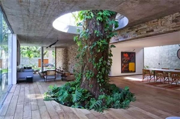 Phải là những người rất yêu thiên nhiên và cây cối mới làm được như thế này thôi.