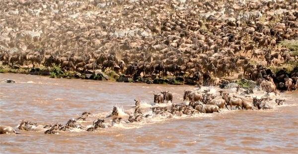 Các cuộc di cư của linh dương diễn ra quanh năm.