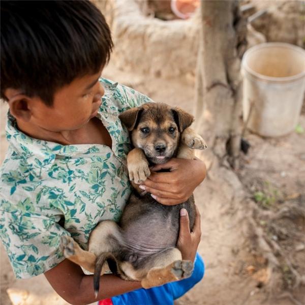 Với mức thu nhập gần 10,5 triệu đồng/người lớn, một gia đình ở Campuchia đủ điều kiện sắm một em cún ngoanngoãn cho cậu con trai của mình.