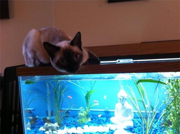 Ý kiến gì? Bố đang cho cá ăn!