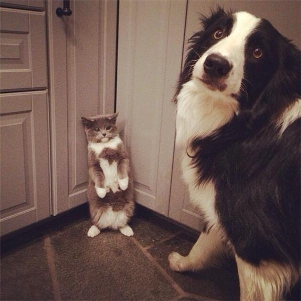 Con đang đo chiều cao cho con mèo thôi, có làm gì nó đâu.