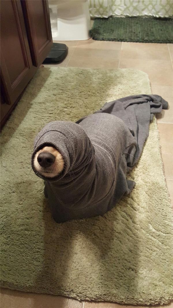 Về nhà và phát hiện có một con hải cẩu trong phòng mình.