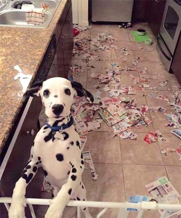 Thằng trộm nó mới chạy ra cửa sau rồi bố ạ, bố rượt theo nó đi.