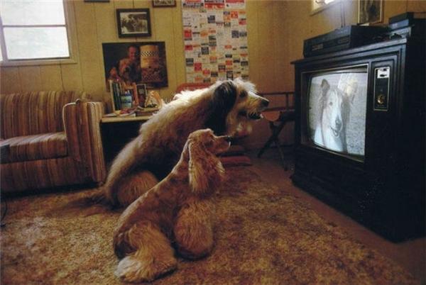 Ở nhà tự tiện bật TV lên coi, ai về cũng không quan tâm.