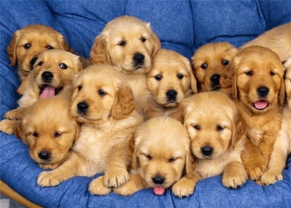 Tóm lại, cún con chính là sinh vật đáng yêu nhất trên đời này, bạn có đồng ý không?