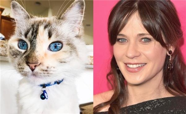 Thần thái từđôi mắt xanh hút hồn hệt như Zooey Deschanel của loạt phim New Girl ăn khách.