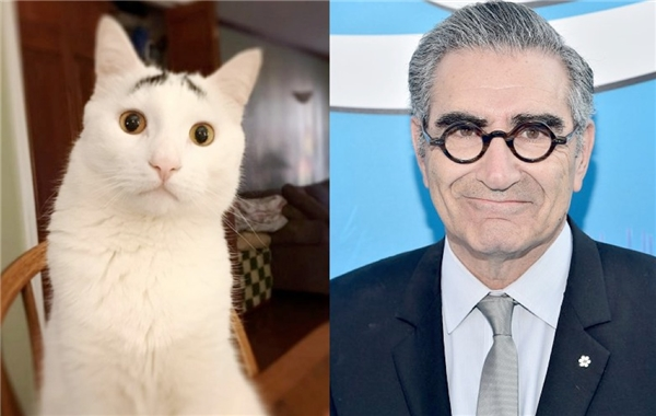 Ai mà ngờ được một chú mèo lại có cặp lông mày trông giống như diễn viên hài Eugene Levy? Chỉ còn thiếu cặp kính tròn nữa thôi là y hệt luôn!