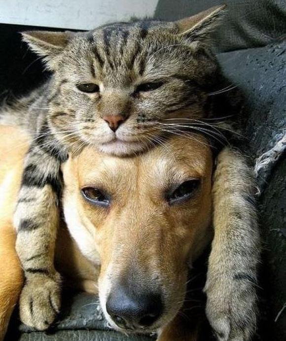 Ở trong cái nhà này, tất cả người và vật đều đối xử bình đẳng với nhau. Chỉ có lũ mèo là được quyền đè đầu cưỡi cổ người ta thôi.