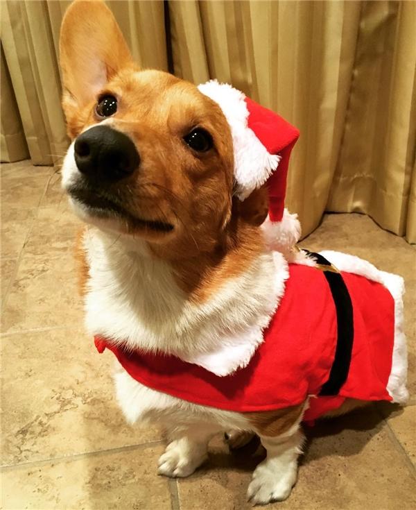 Trang phục Ông già Noel không bao giờ lỗi mốt.