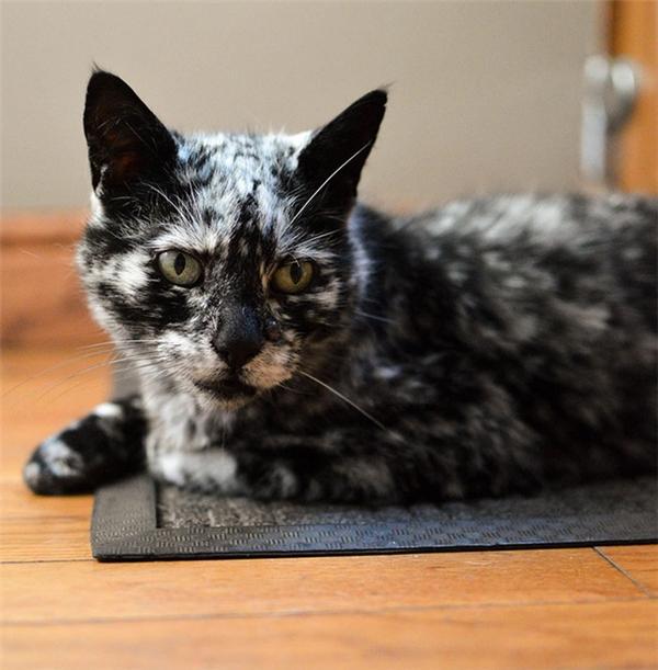 Tuy màu lông đã bị biến đổi nhưng tính tới thời điểm hiện tại, sức khỏe của chú mèo đáng yêu này vẫn không bị ảnh hưởng quá nghiêm trọng.