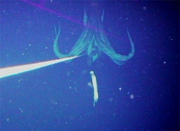 Hãi hùng chiêm ngưỡng những quái vật dưới đáy đại dương