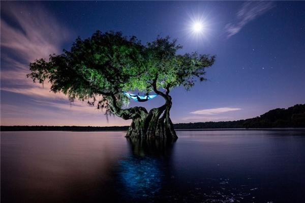 Hình ảnh đầy ảo diệu và nên thơ này chính là chiếc võng được mắc trên thân cây giữa hồ nước ở Florida, Mỹ là nơi ngả lưng của nhiếp ảnh gia chụp ảnh bảo tồn thiên nhiên và động vật hoang dã - Mac Stone - hồi tháng 8 vừa qua.