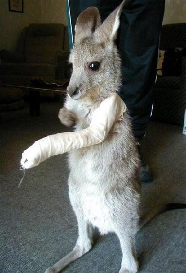 Tay tôi bị sao vầy nè? Ai đã làm gì cánh tay tôi thế? Cứu tôi với! Có ai không?