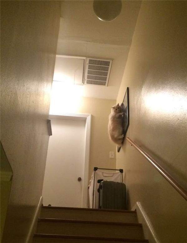 Nhà này là của bố, bố thích trèo đâu thì bố trèo nhé.